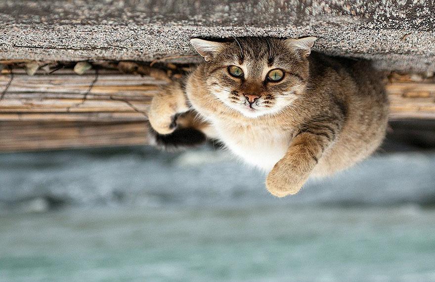 Portrete superbe de animale, de Sergey Polyushko - Poza 8