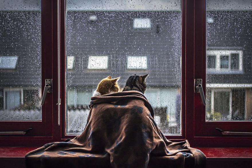 Pisicile care adora ploaia - Poza 2