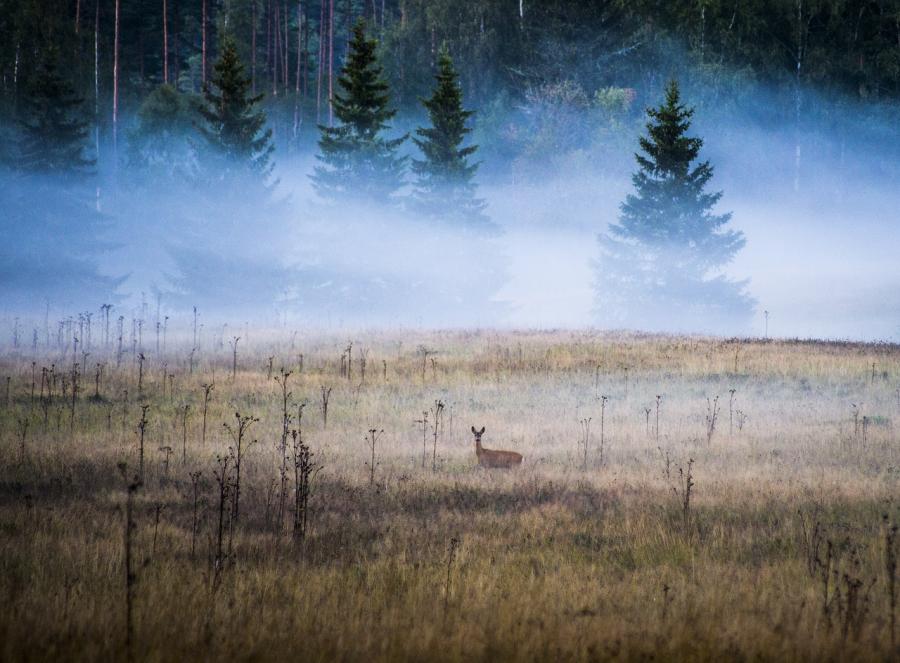 Cele mai frumoase peisaje de toamna, in imagini superbe - Poza 20
