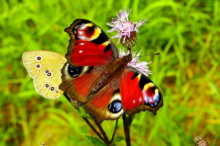 Cei mai frumosi fluturi din lume, in poze spectaculoase - Poza 6