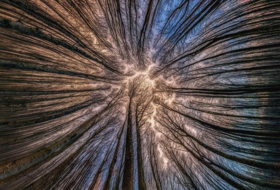 Splendoarea arborilor centenari, in urcusul lor spre cer - Poza 4