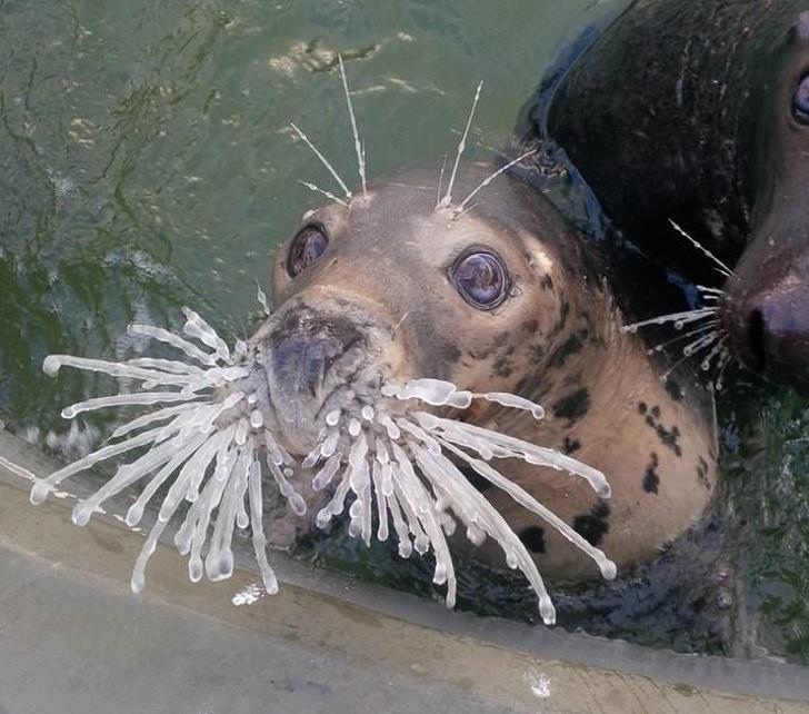 Animale cu simtul umorului, in cele mai haioase poze - Poza 4