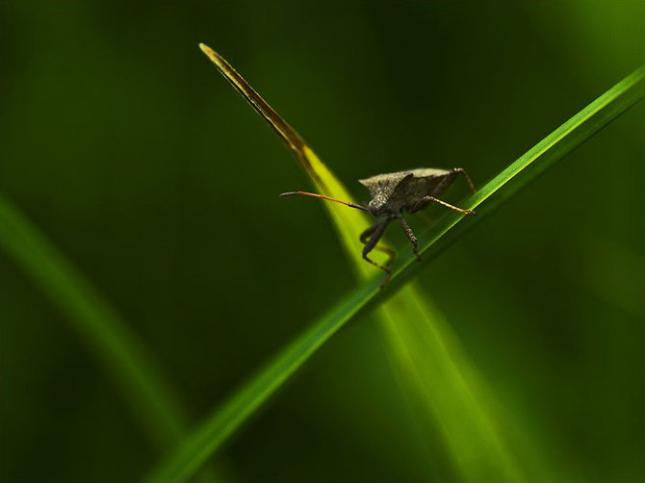 Natura la control, in 40 de poze - Poza 17