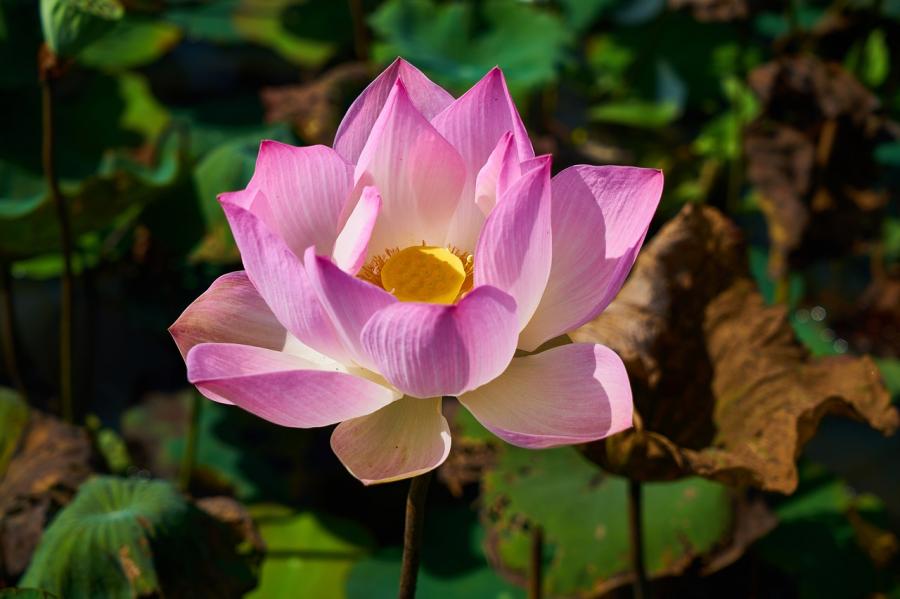 Cele mai frumoase flori din lume, intr-un pictorial de exceptie - Poza 13