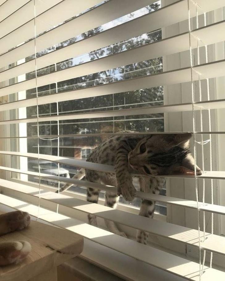 Dovezi ca pisicile sunt adorabile din orice unghi le-am privi - Poza 14