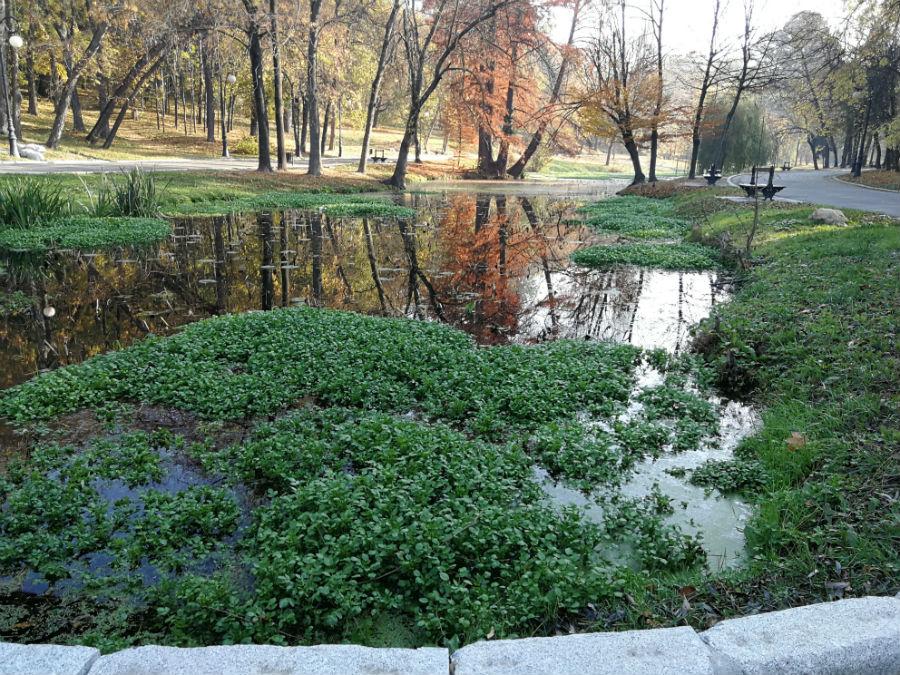 Parcul Nicolae Romanescu: Minunea verde din Banie, in poze superbe - Poza 12