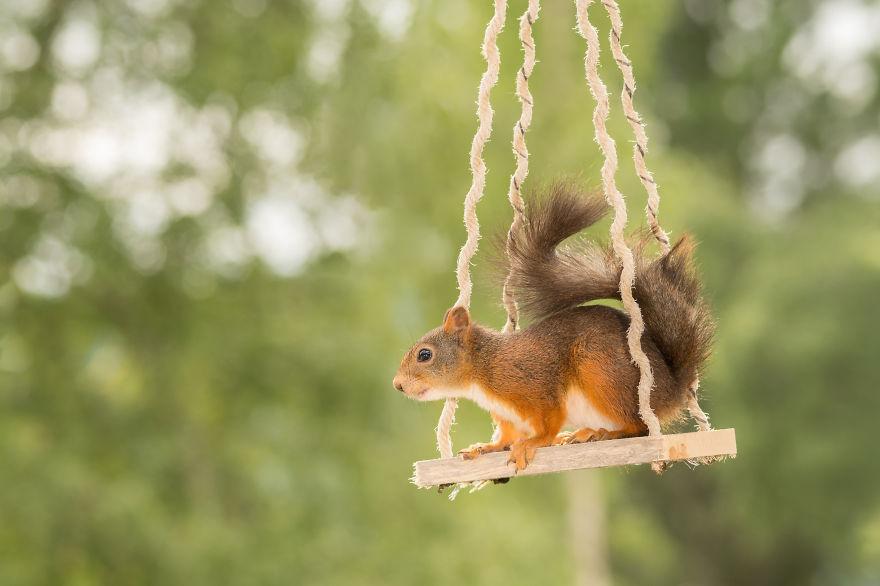 Frumoasa poveste cu veverite roscate, intr-un pictorial adorabil - Poza 16