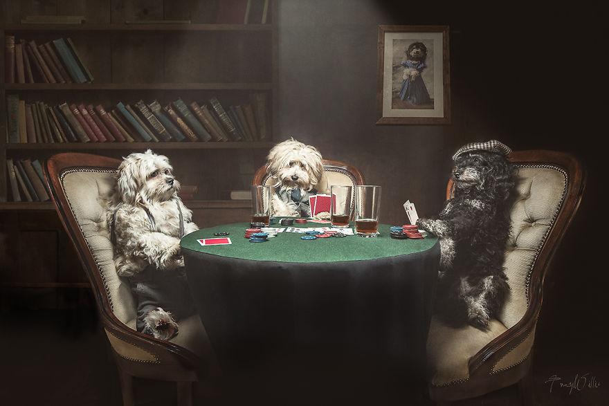 Povesti cu animalute haioase, in poze suprarealiste - Poza 3