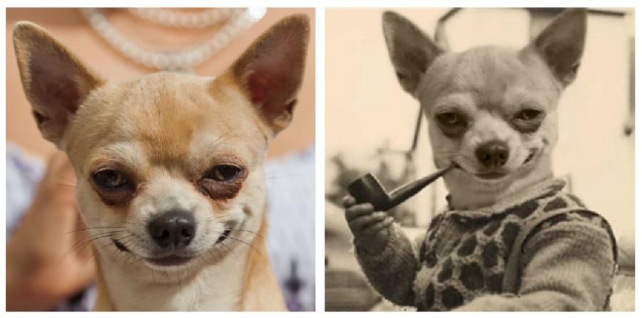 Cele mai haioase poze prelucrate in Photoshop - Poza 3