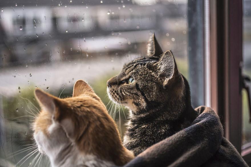 Pisicile care adora ploaia - Poza 6