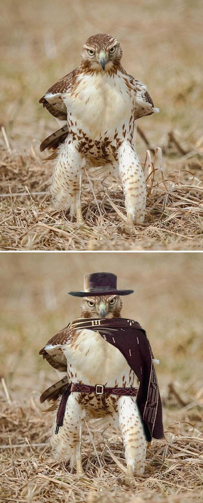 Cele mai amuzante poze prelucrate in Photoshop - Poza 6
