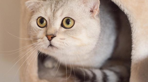 Ce-ti transmite pisica prin pozitia cozii - Poza 5