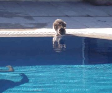 11 animatii cu animale bagate in sperieti