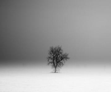 Peisaje alb-negru si melancolie, de Derek Toye