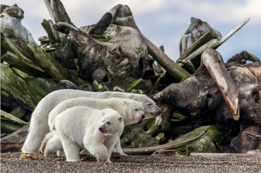 BigPicture Photo Contest: Fotografii spectaculoase din natura - Poza 3