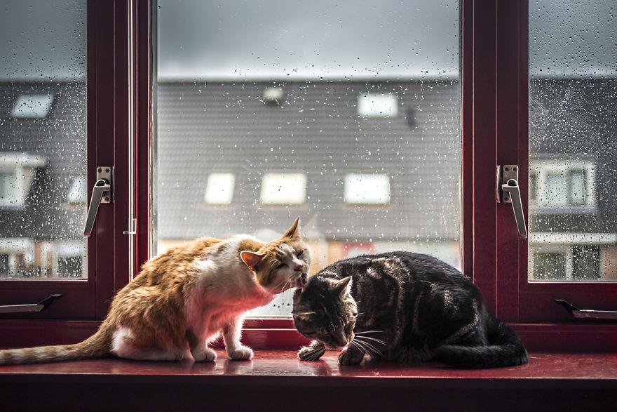 Pisicile care adora ploaia - Poza 5