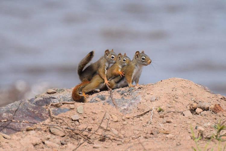 Premiile Comedy Wildlife: Poze amuzante cu animale salbatice - Poza 14