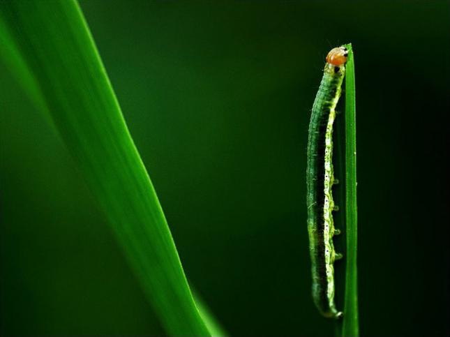 Natura la control, in 40 de poze - Poza 14