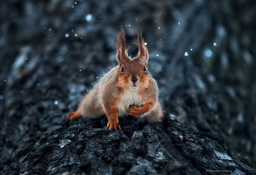 Portrete superbe de animale, de Sergey Polyushko - Poza 3