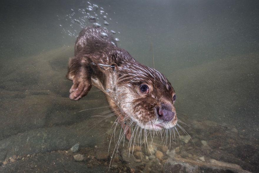 Fotografii superbe din uimitoarea lume subacvatica - Poza 16