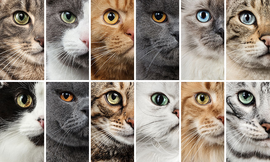 Cele mai frumoase pisici, intr-un pictorial atipic - Poza 3