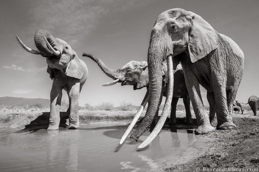 """Povestea ultimelor fotografii cu """"Regina elefantilor"""" - Poza 2"""