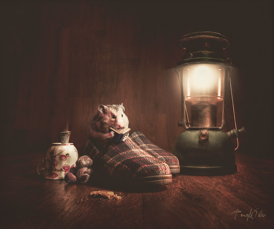 Povesti cu animalute haioase, in poze suprarealiste - Poza 13