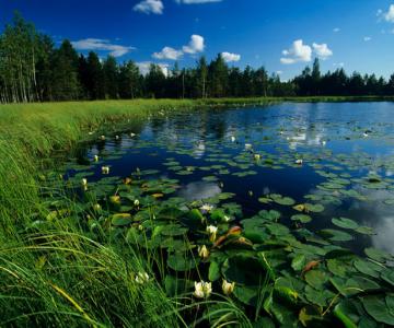 Natura surprinsa in fotografii: patru anotimpuri