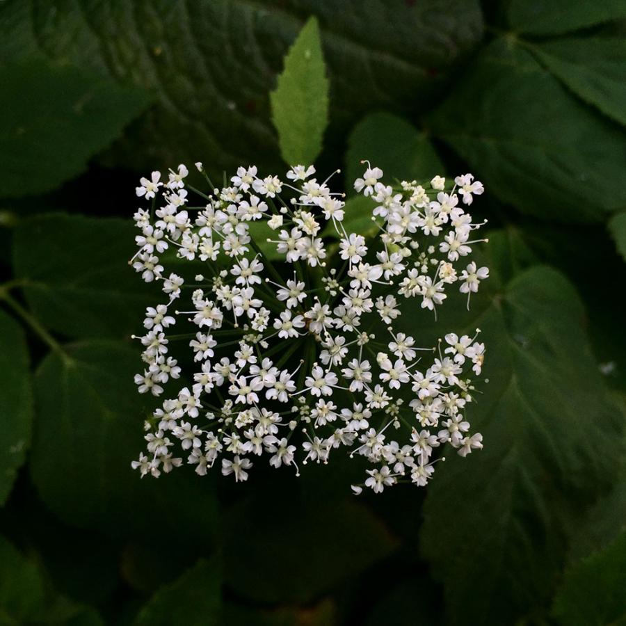 Flori patrate: Cand geometria naturii devine relativa - Poza 3