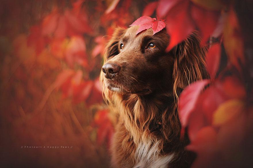 Portrete autumnale de suflet, de Anne Geier - Poza 3
