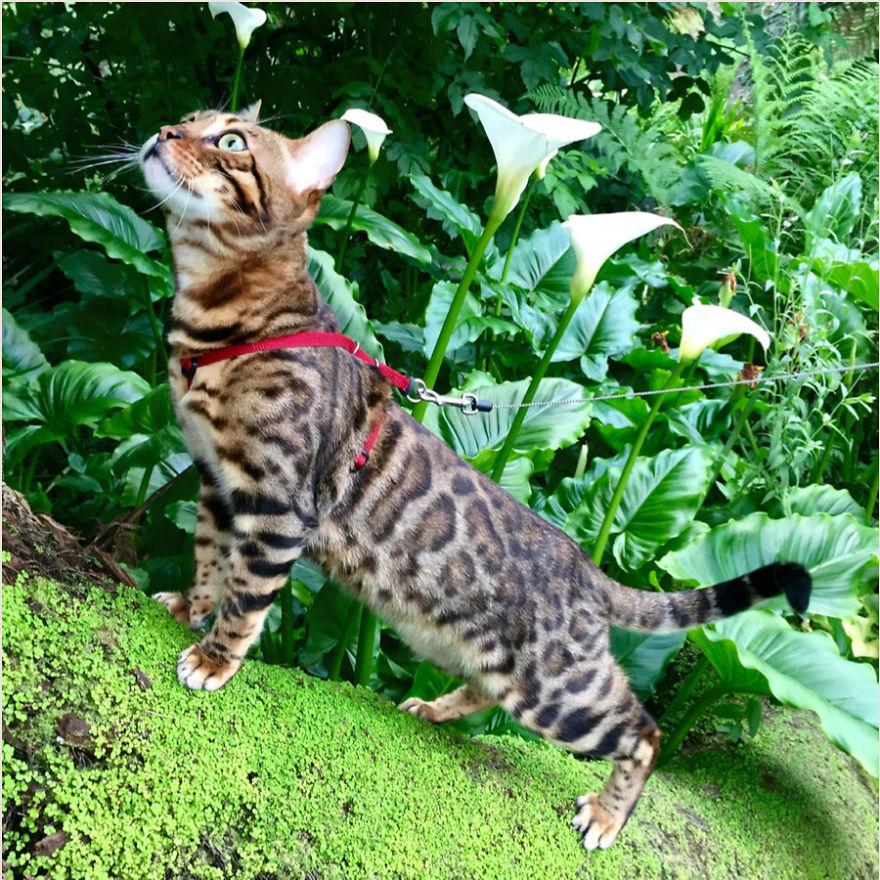 Cele mai frumoase poze cu pisici - Poza 20