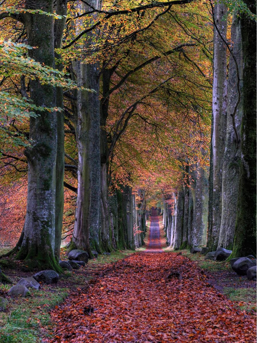 Cele mai frumoase peisaje de toamna, in imagini superbe - Poza 4
