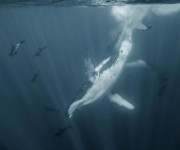 Viata secreta a balenelor, cu Darren Jew