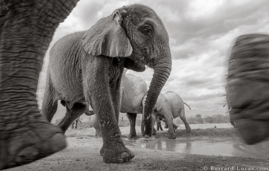 """Povestea ultimelor fotografii cu """"Regina elefantilor"""" - Poza 12"""