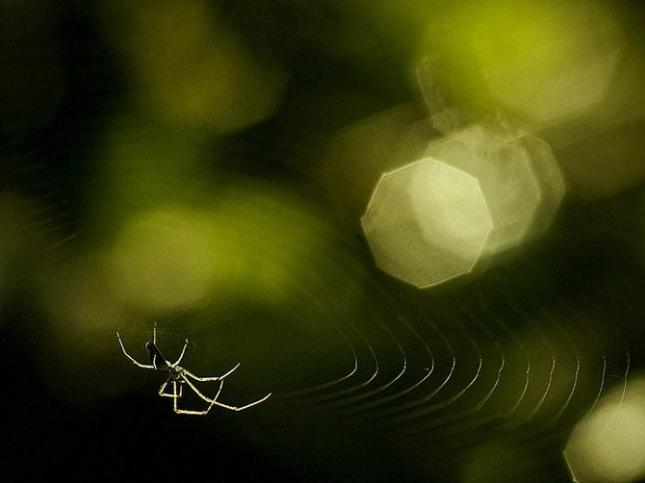 Natura la control, in 40 de poze - Poza 35