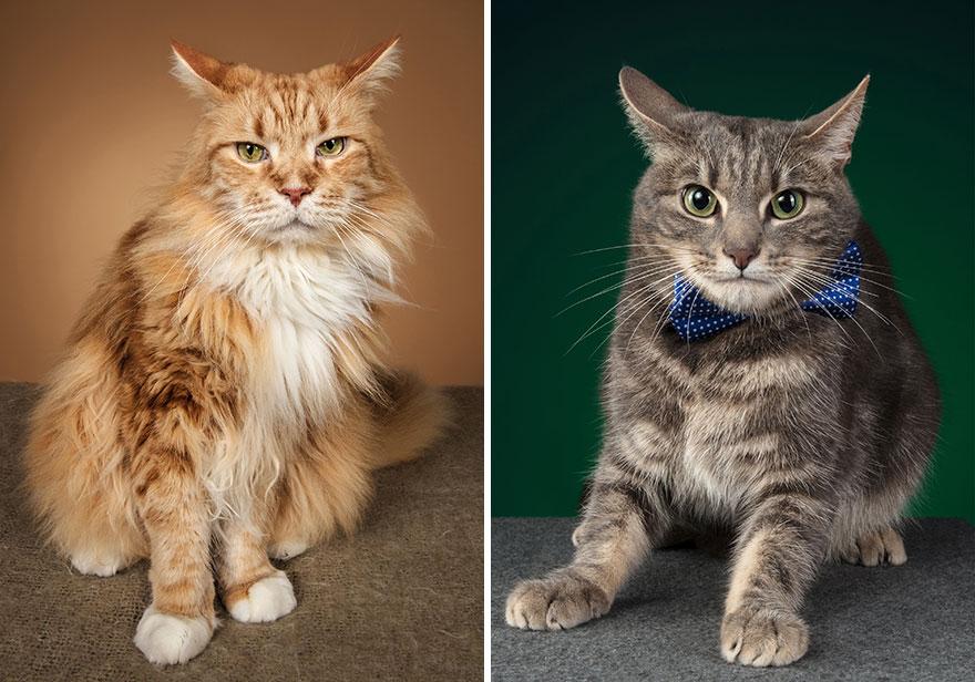 Cele mai frumoase pisici, intr-un pictorial atipic - Poza 11
