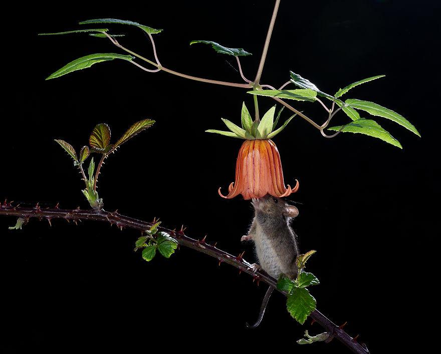 Cele mai bune fotografii cu si despre natura din 2019 - Poza 6