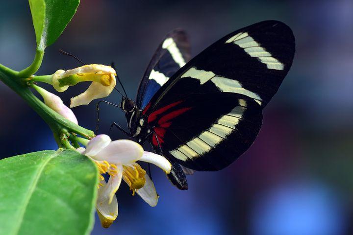 Cei mai frumosi fluturi din lume, in poze spectaculoase - Poza 11