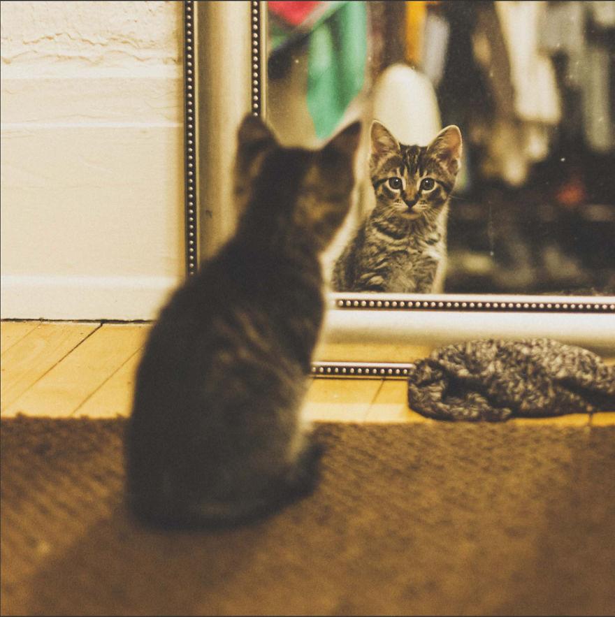 Cele mai frumoase poze cu pisici - Poza 30