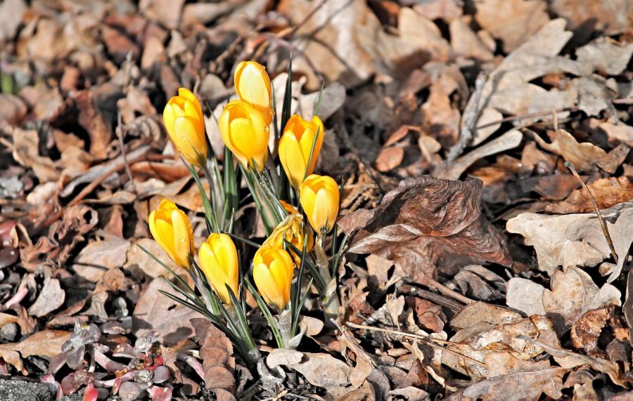 Cele mai frumoase flori din lume, intr-un pictorial de exceptie - Poza 8