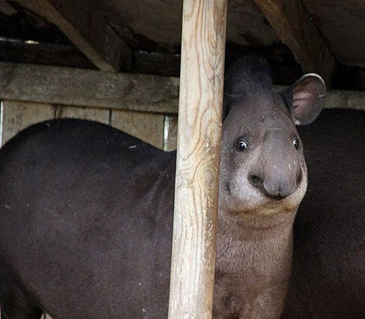 20+ Animale poznase care se stramba in fata aparatului foto - Poza 17