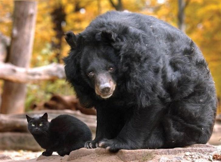 Cele mai prietenoase animale, in imagini induiosatoare - Poza 8