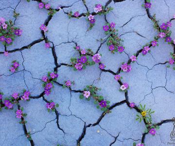 Frumusetea naturii in 13 poze cu flori in locuri neasteptate