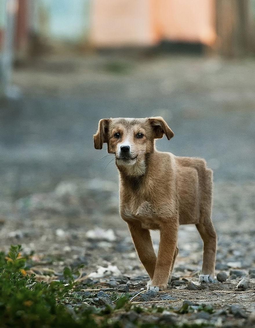 Animale colturoase, de Aditya - Poza 8