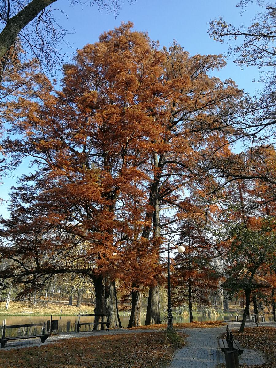 Parcul Nicolae Romanescu: Minunea verde din Banie, in poze superbe - Poza 22