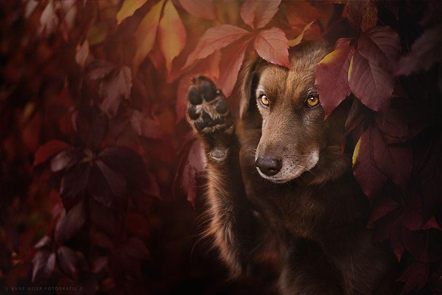 Portrete autumnale de suflet, de Anne Geier - Poza 14