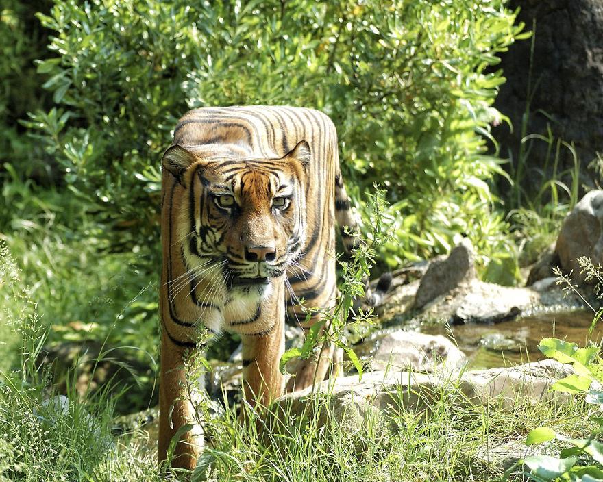 Animale colturoase, de Aditya - Poza 9