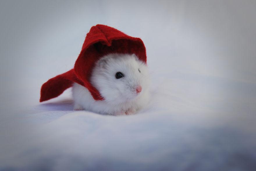 Cele mai simpatice animalute, intr-un pictorial superb - Poza 17