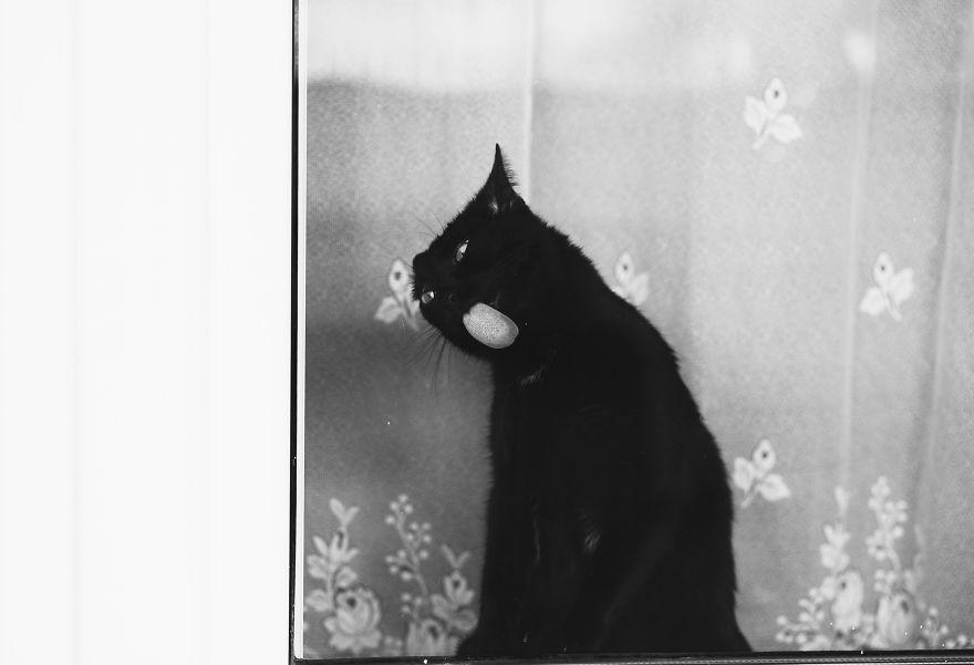 Pisici la fereastra, in poze alb-negru - Poza 15