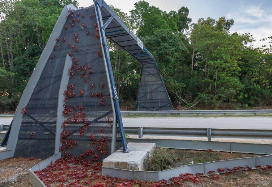 Poduri speciale pentru vietuitoarele salbatice - Poza 2
